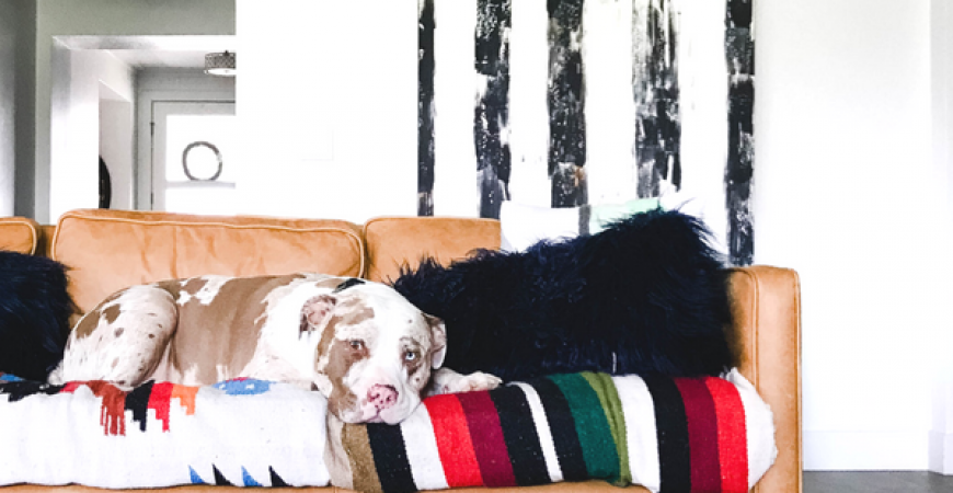 3 easy ways to make your home more pet friendly