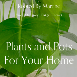rooted by Martine black owned plant shop
